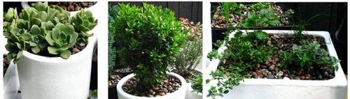 Plantas2-2