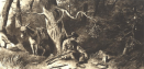 Bear Hunting in the Sierra Mountains;  By F.O.C. Darley, 1880s;  John Muir Collection