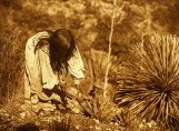 Credit: Edward S. Curtis, Early 1900s;  National Anthropological Archives, Smithsonian Institution;  Essential plant for the survival of the Mescalero Apache People