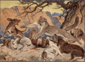 Mountain lion dogs at bay;  Paul Branson