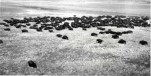 Bison population survey photograph, Wood Buffalo National Park (17 July 1946)