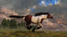 The Young Lion Hunter - pinto-mustang-galloping-daniel-eskridge