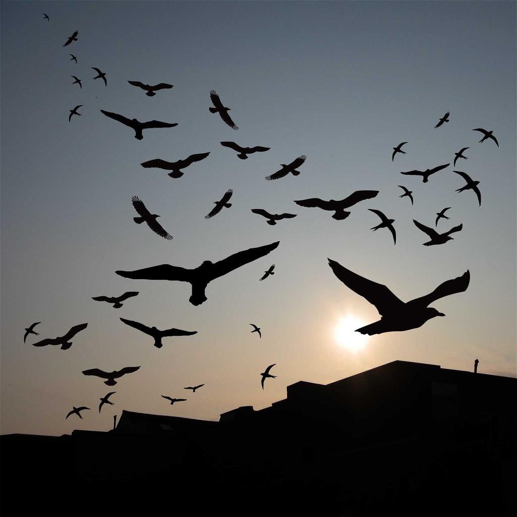 Burung Gagak  Sang Swara