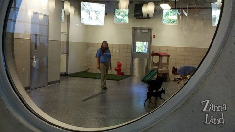 Best Friends Pet Center