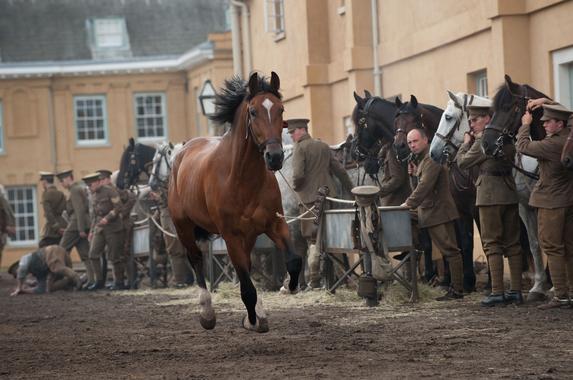 War Horse Joey