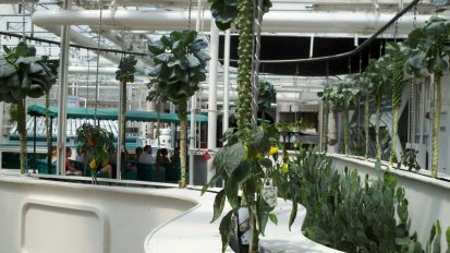 Behind the Seeds Tour hydroponics