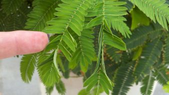 Behind the Seeds Tour touch sensitive plant