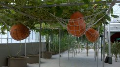 Behind the Seeds Tour pumpkins