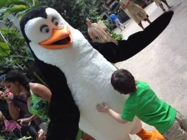 A Madagascar penguin