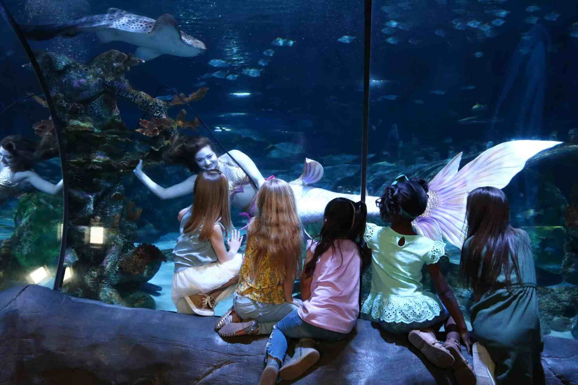 Mermaids Sea Life Orlando