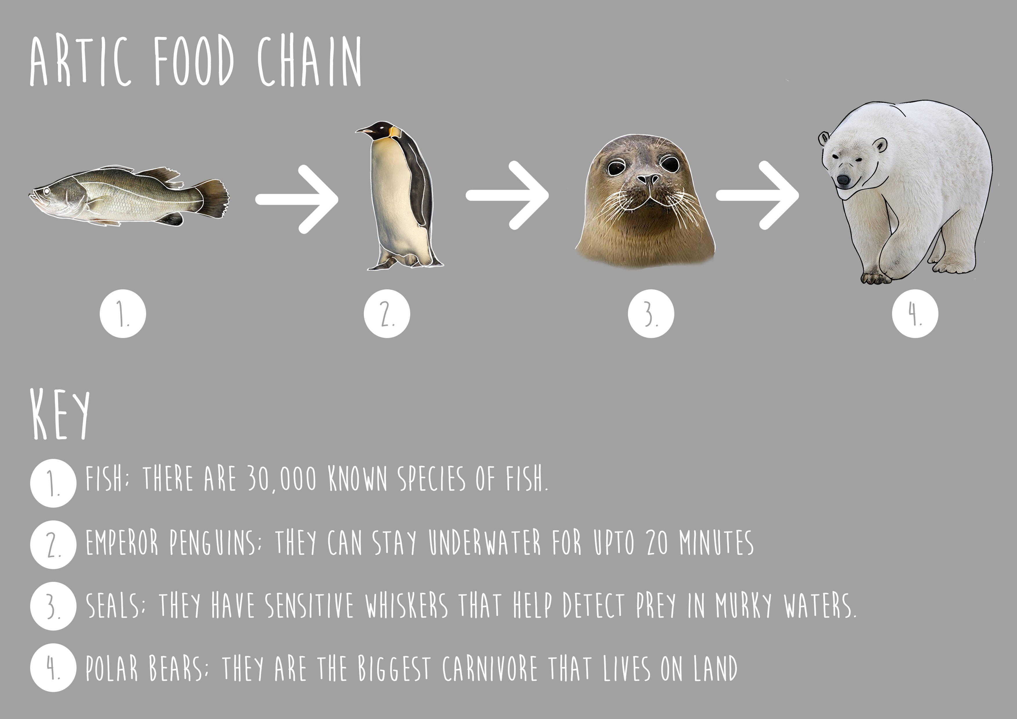 Pictures Of Ocean Food Chains