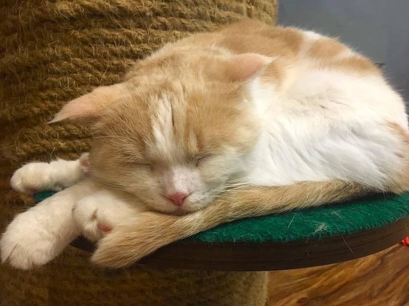 Gatinho dormindo