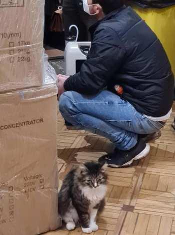 котенок с концентраторами