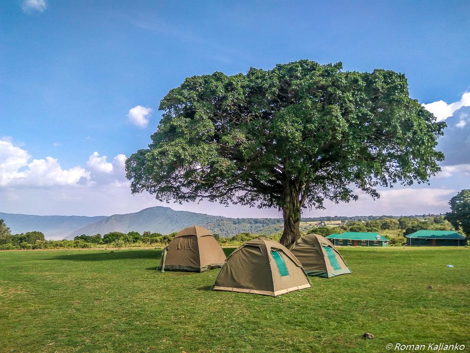 Stanovanie pod obrovským figovníkom na okraji krátera Ngorongoro
