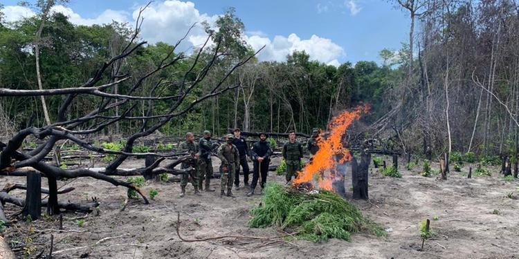 Operação apreende 146 mil toneladas de manganês e destrói 3 mil pés de maconha no Pará