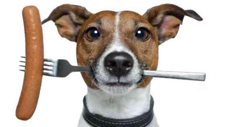 вазелиновое масло при запоре у собак