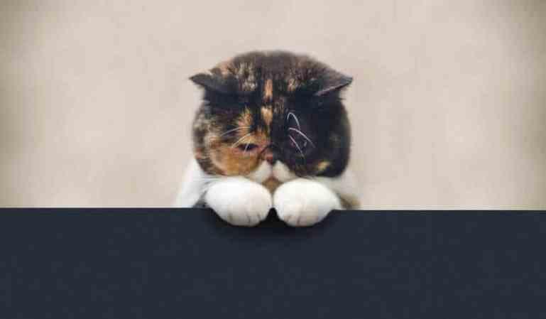 У кота запор что делать