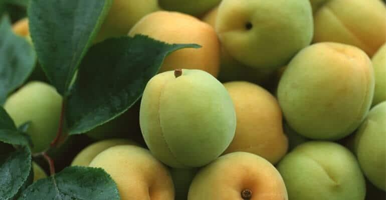 слабительные фрукты при запорах