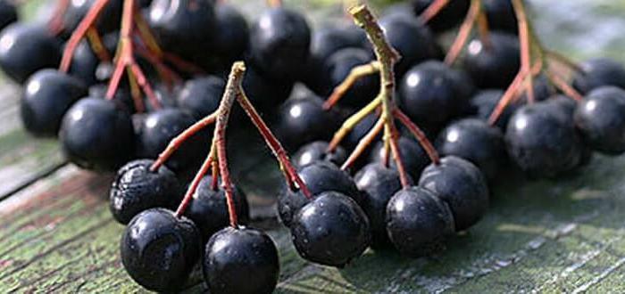 черноплодная рябина запоры
