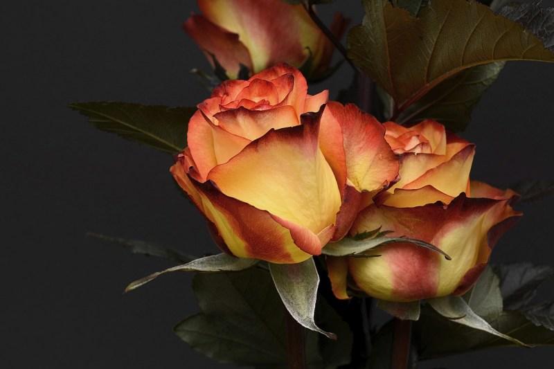 Blog 212 - Hatke Valentine Day Ideas - 9