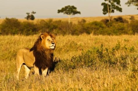 Clique para abrir o álbum de Masai Mara