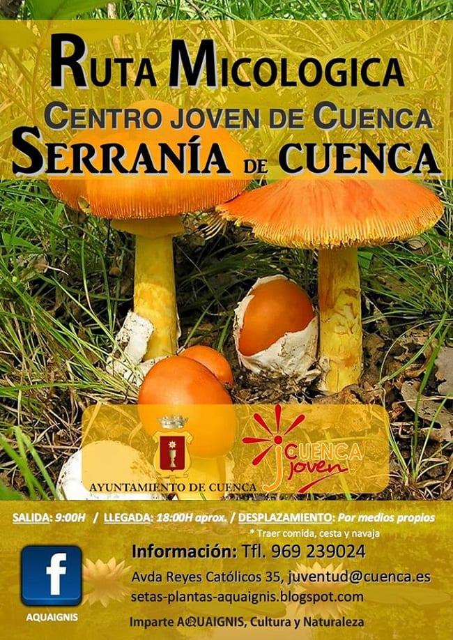 Ruta micológica en la Serranía de Cuenca