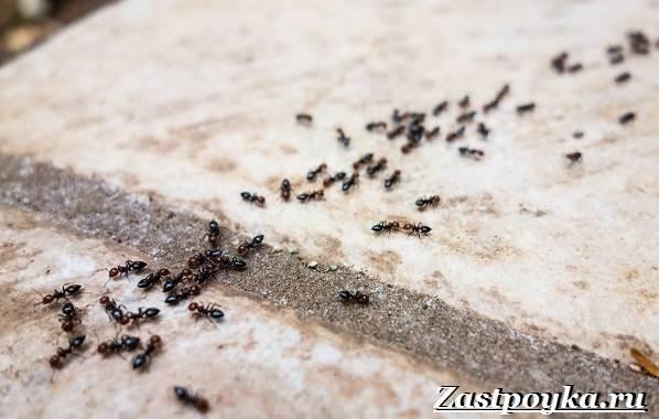 Как-избавиться-от-муравьев-дома-13