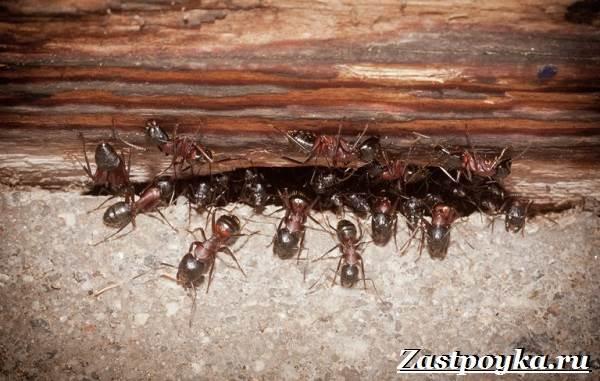 Как-избавиться-от-муравьев-дома-15