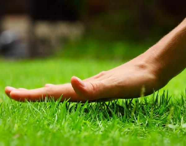 Рулонный-газон-Особенности-виды-укладка-и-цена-рулонного-газона-3