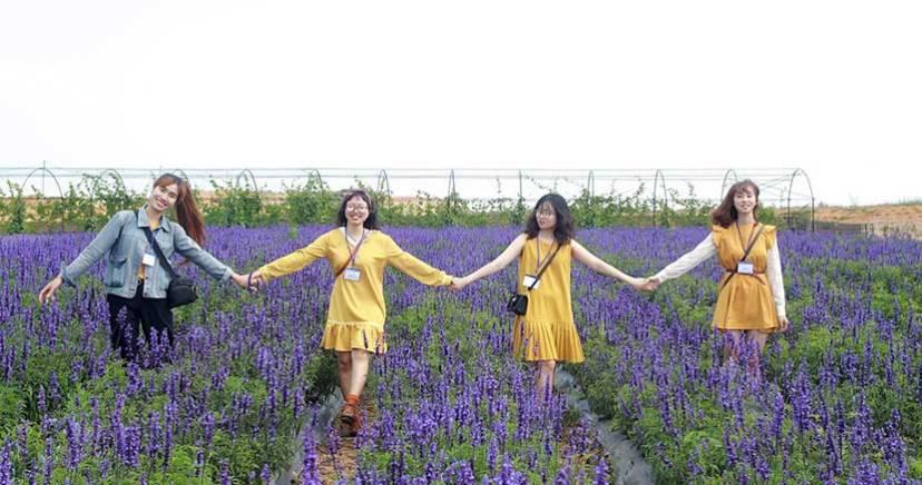 trai mat co gi - canh dong hoa lavender