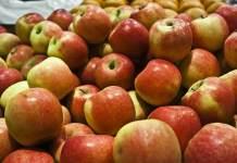 bezpłatne jabłka dla mieszkańców osieka