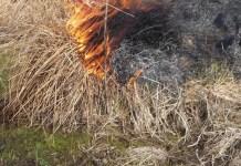 wypalanie łąki