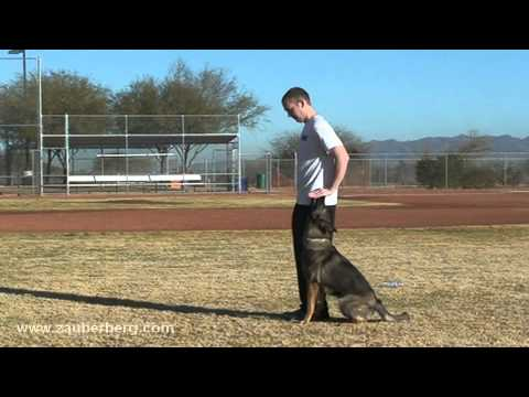 Our dog training is based on scientific laws of learning