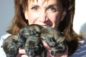 German Shepherd puppies from working lines for sale Phoenix