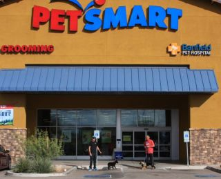 Puppy socialization at Petsmart