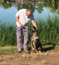 Sigi trained protection dog for sale NJ