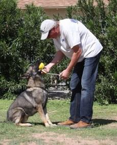 How to play ball germans Shepherd Training
