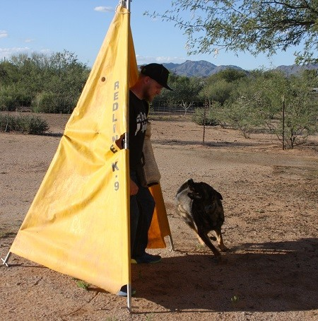 Finally getting to the schutzhund decoy
