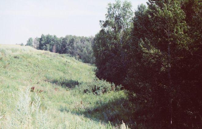 лесной лог - светлана кузнецова 1