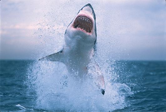 La Semana del Tiburon returns to Discovery en Espanol on June 26. (PRNewsFoto/Discovery en Espanol)