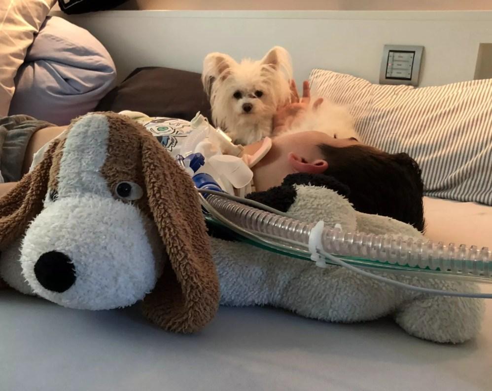 Tiere in der Pflege