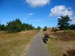 Radweg durch die Dünenanpflanzung (Klitplantage)