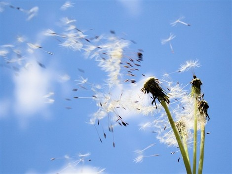 pupava-alergia