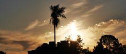 Palmowy zachód słońca