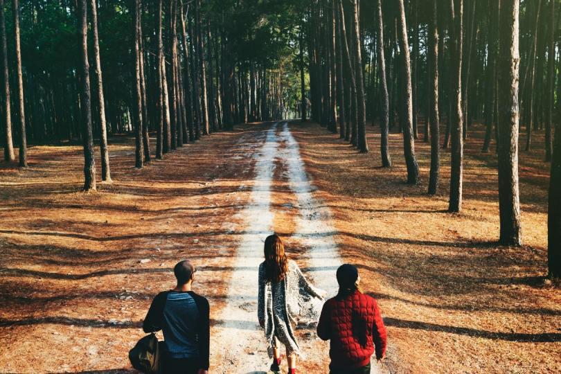 šetnja šumom