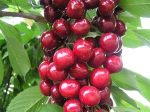 cherry_1_big