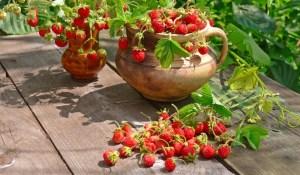 wild-strawberry1