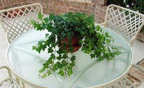 растения лечители