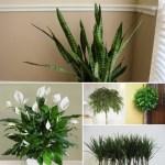 Ето това са растенията, които НЕ трябва да сложите в спалнята!