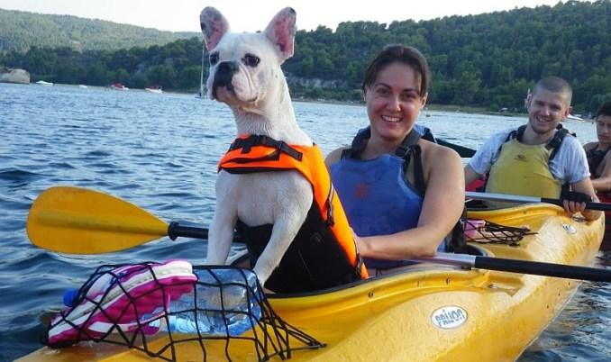 куче в лодка